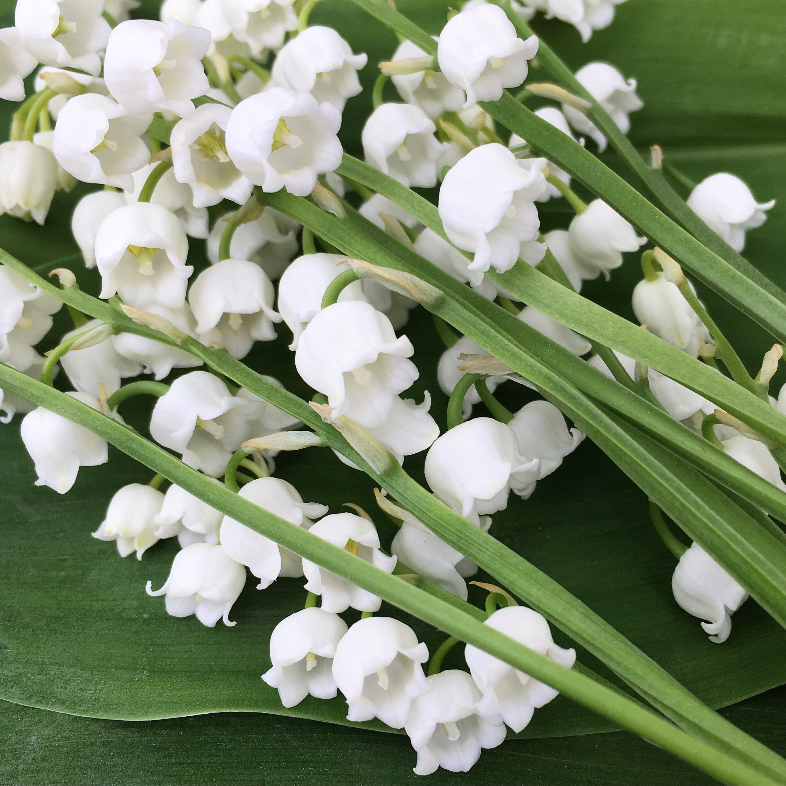 Lily of the valley from beads: photos, diagrams and features of weaving, recommendations for beginners 14